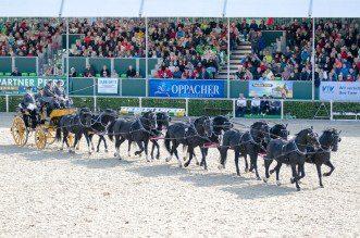 Moritzburger Hengstparade - Der Zehnerzug (Foto:Hans-Joachim Reiner)