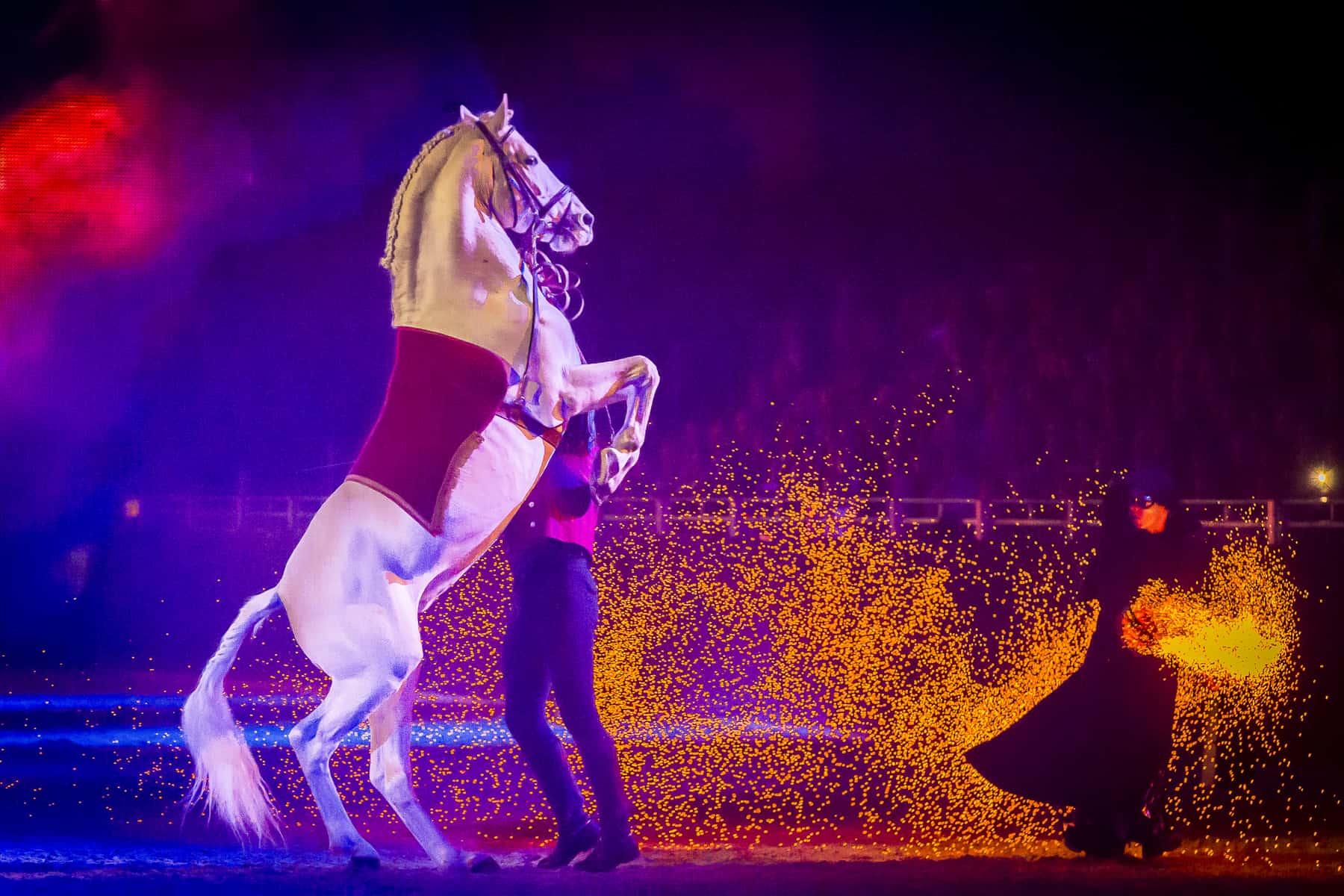 excalibur_horsehowscCh.Slawik-Wuerzburg-Germany-.jpg