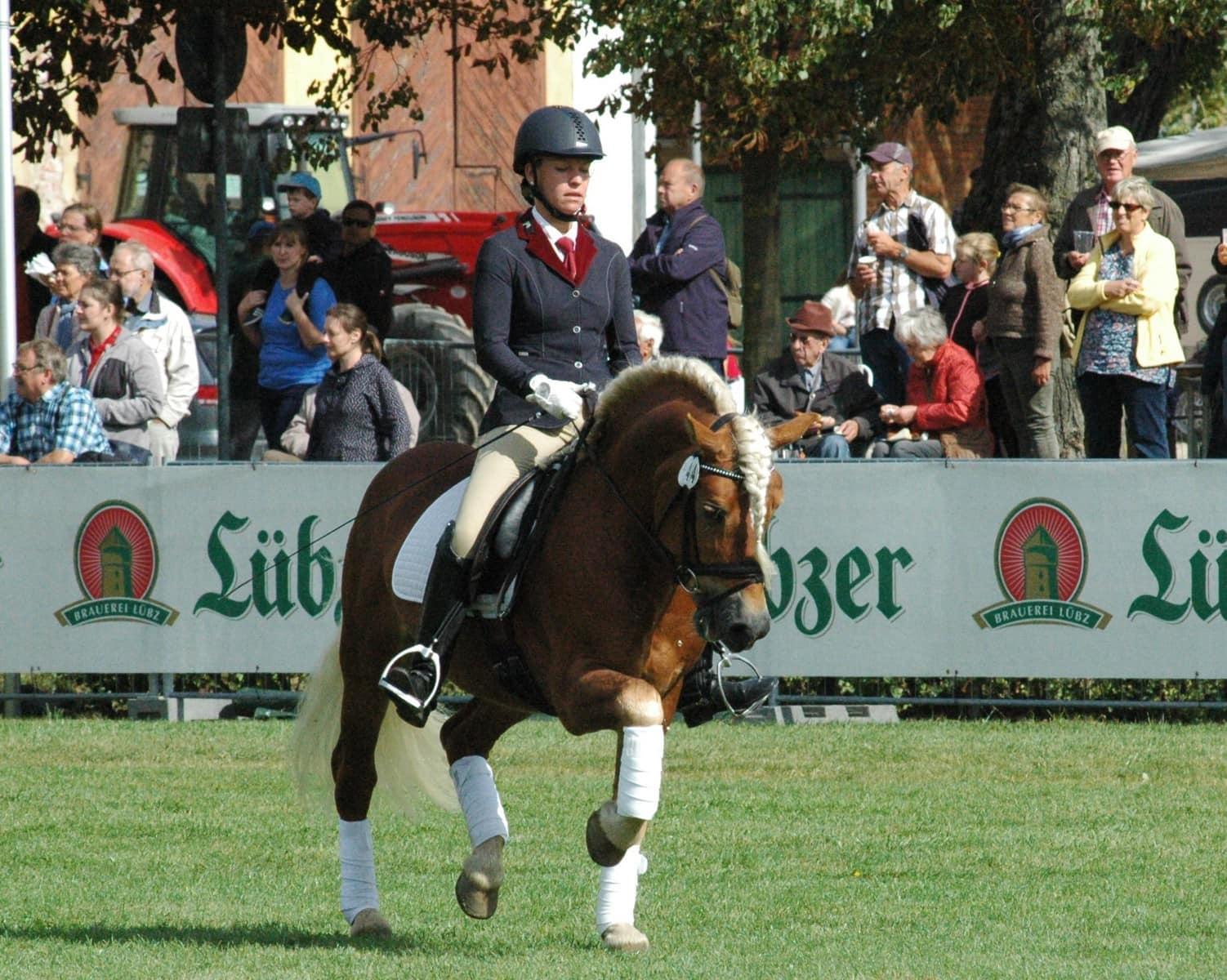 Championats Pferd Amore Mio, GOW Friedsricke Maas (2)