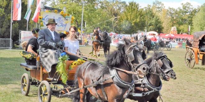 Ascania-Pferdefestival 2018, Rudolf Langhoff (86 Jahre) mit seinem Gespann (Foto:Margot Schöning