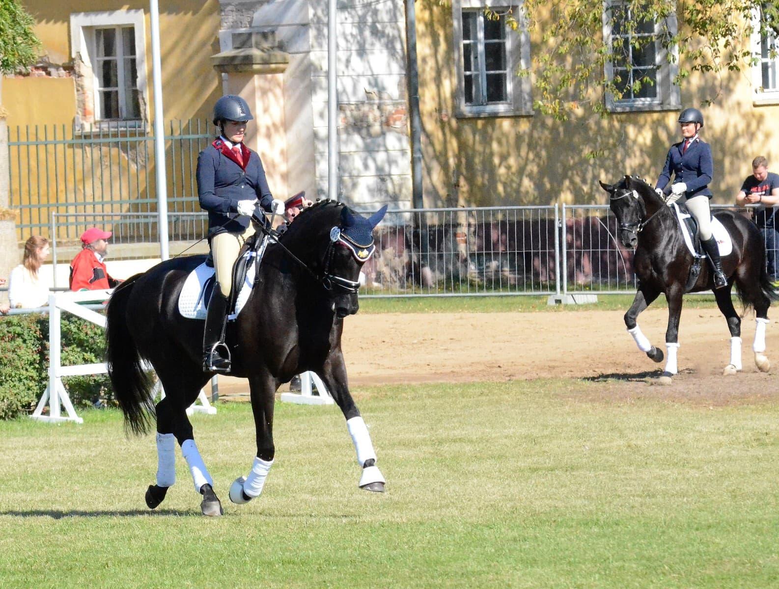 Championats-pferde-GOW-Stafanie-Fiedler-Phantastica-Nr.68