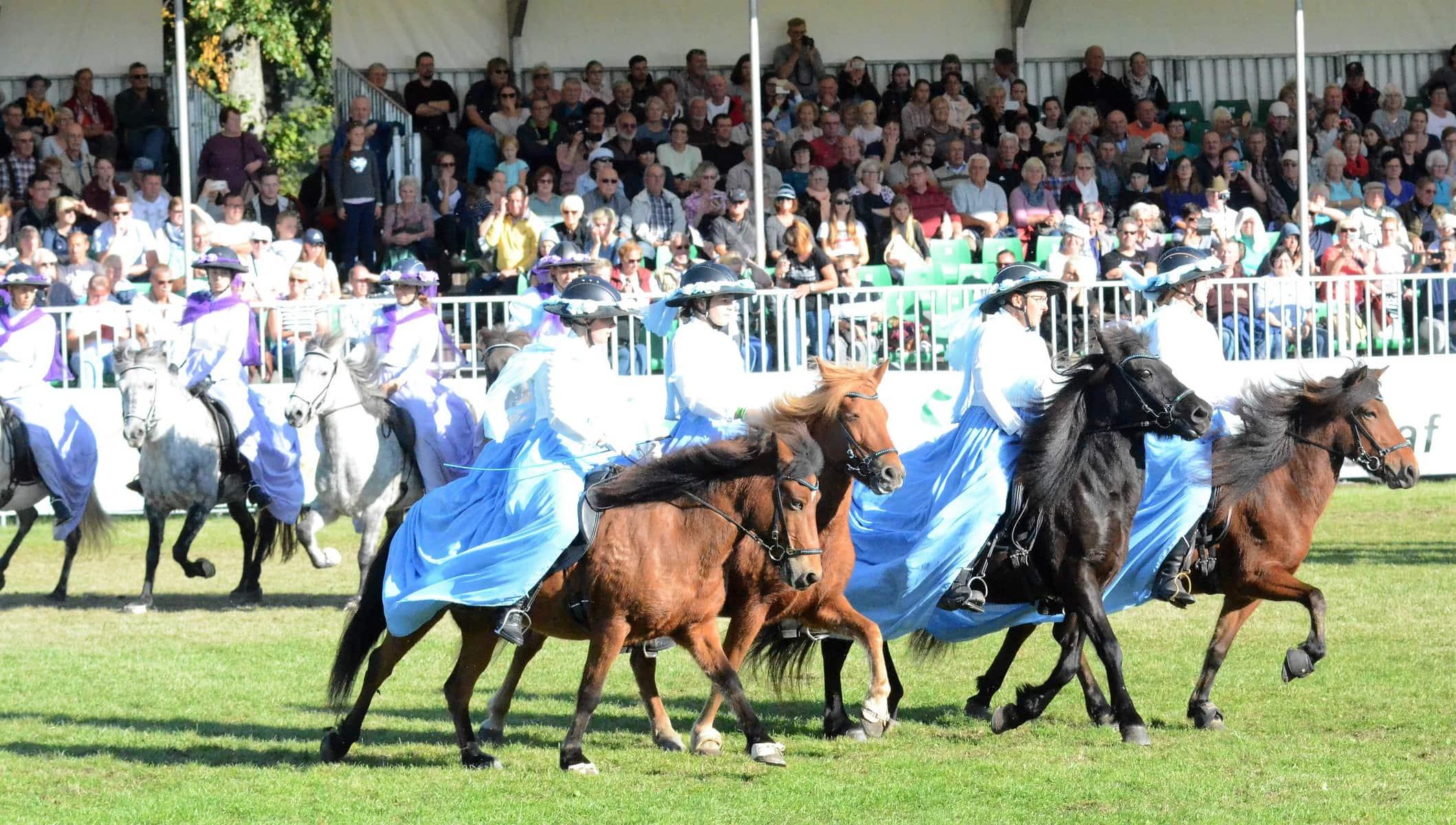 Gäste-Island-Pferde-Quadrille