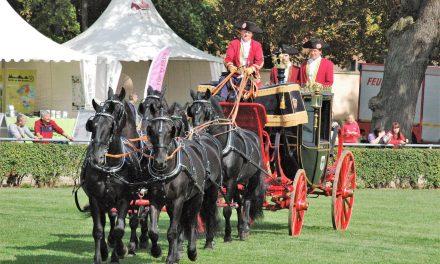 Sanssouci der Pferde